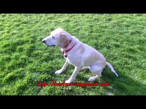 Sit Means Sit Dog Training. Fairfax, VA