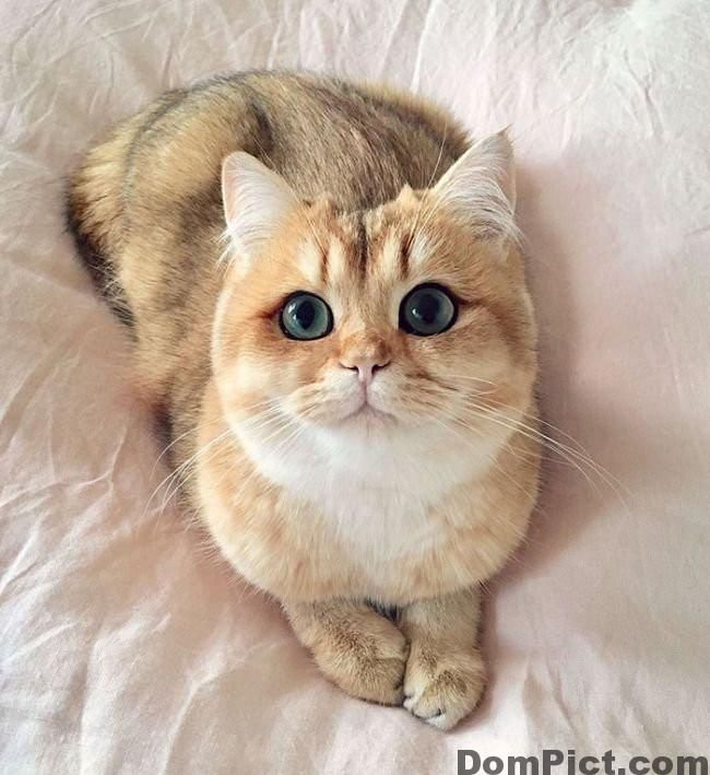 TOP 29 Most Beautiful Cats