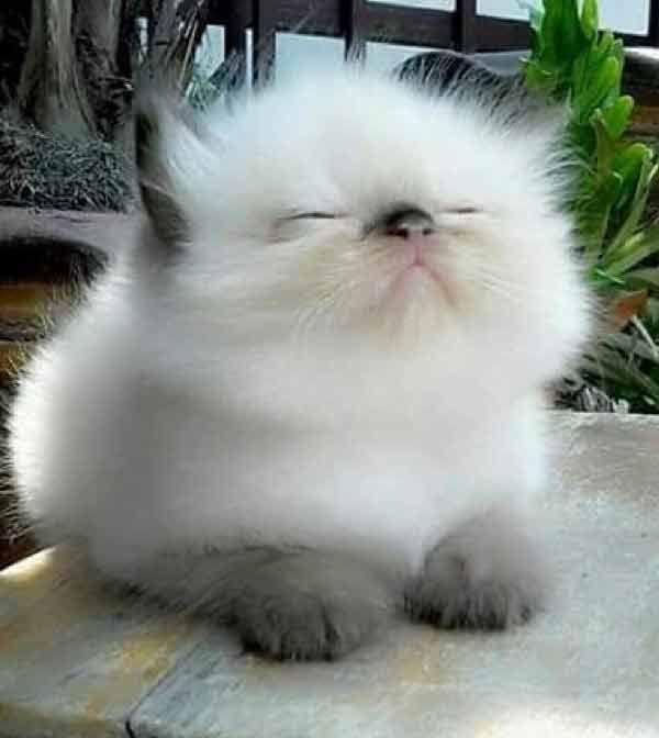 What a Fluffy Kitten - 14th June 2019 - We Love Cats and Kittens #fluffykittens ...