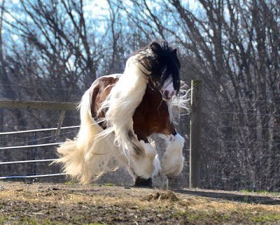 ANIMALS OF PLANET EARTH: Horses