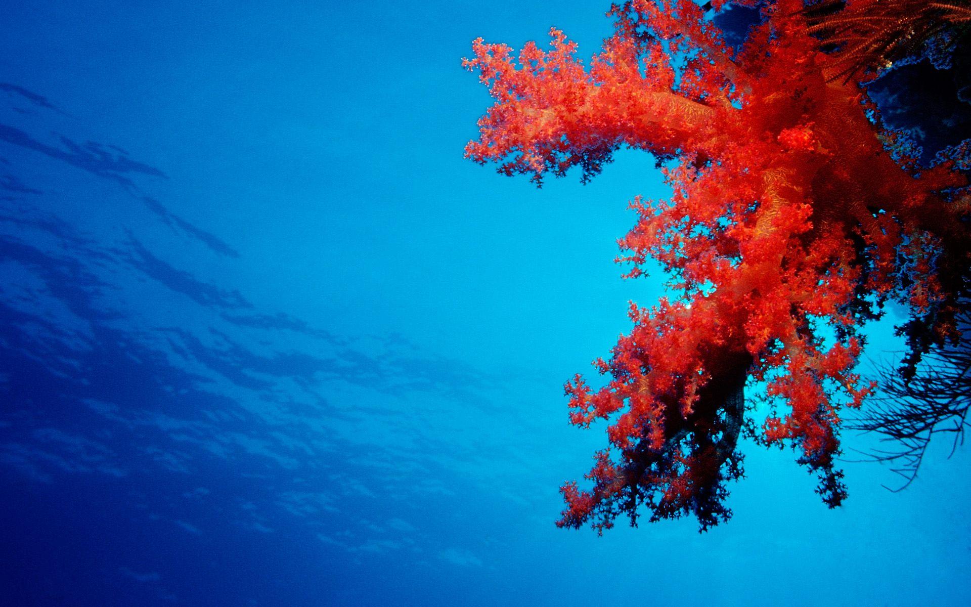 coral reef 4k ultra hd wallpaper | 8k ultra hd 4k ultra hd hd 1080