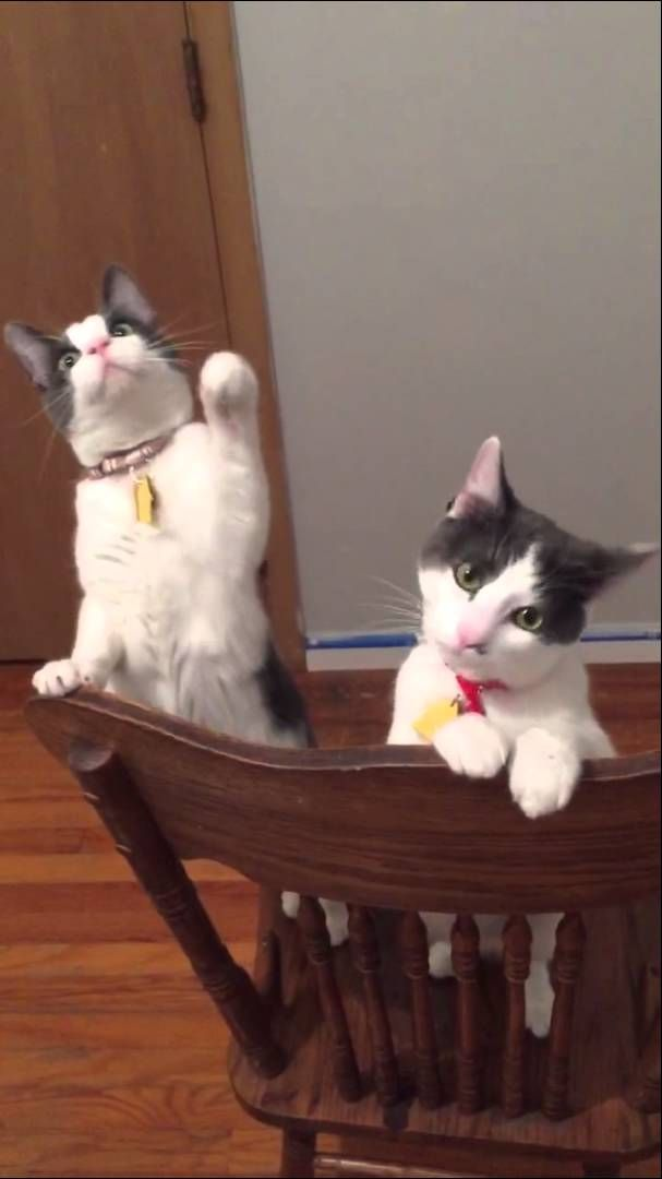 A Pair Of Inquisitive Cats Become Fascinated With The Spinning