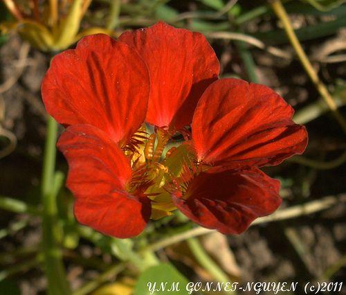 Fleurs et Fruits - Merveilles d\'Automne - Parc de Bagatelle ...