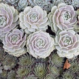 How to Care for Your Succulent Terrarium