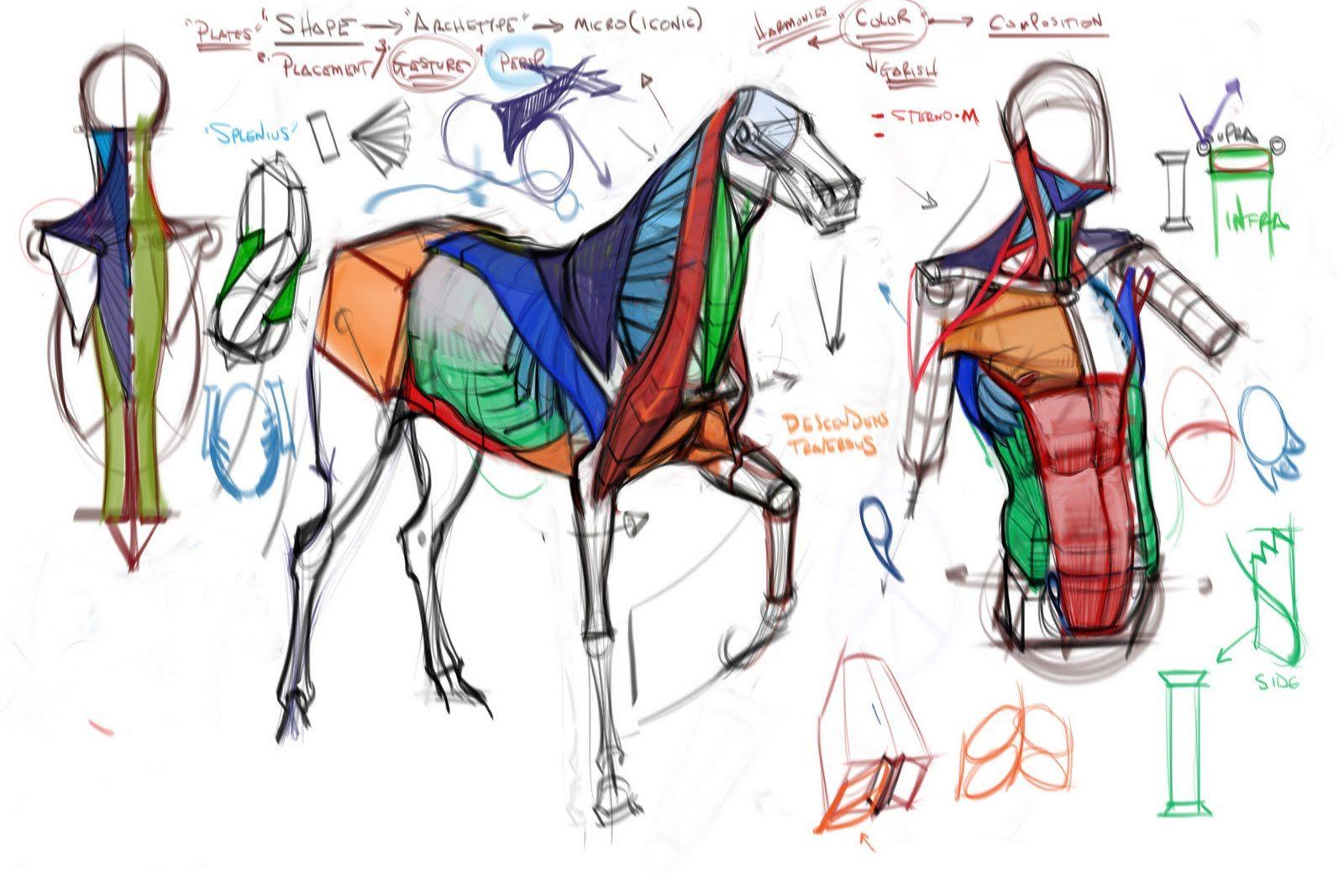 Figuredrawingfo News Comparative Anatomy Comparative Anatomy