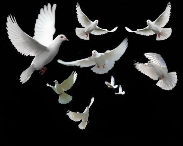 Doves are one of the two birds found in the novel  The Doves