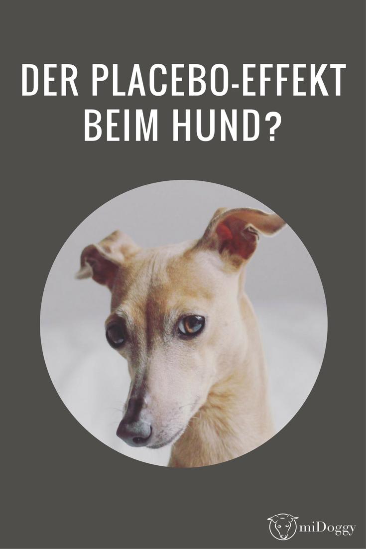 Placebo Oder Die Kraft Unserer Gedanken Hunde Hundehaltung Hundeverhalten