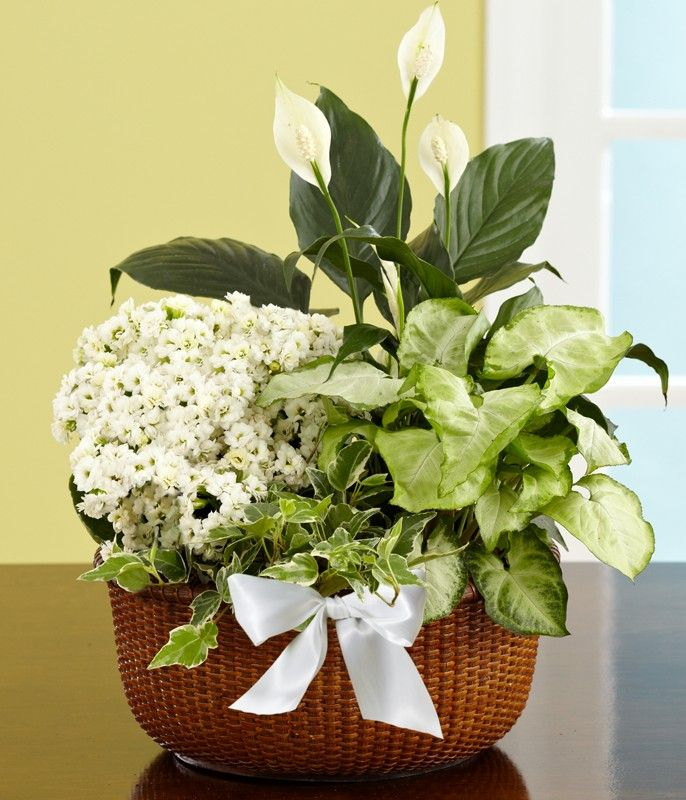 images of indian funeral | Buy Plants Online | Indoor Plants ...