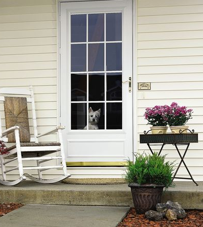 Puppy Enjoying The View Out His Pella Storm Door Best Door Designs Door Design Storm Door