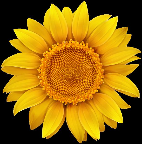 Pin by hasan jutt on flower designes Sunflower clipart