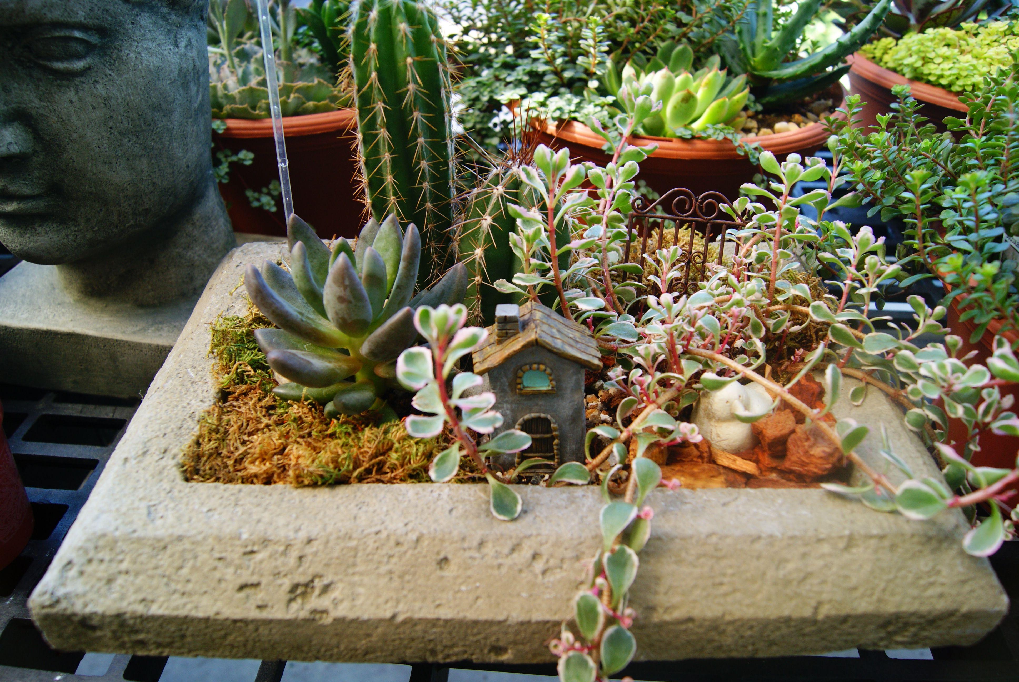 Fairy Garden at Zittel\'s Country Market in Hamburg, NY. | Our Market ...