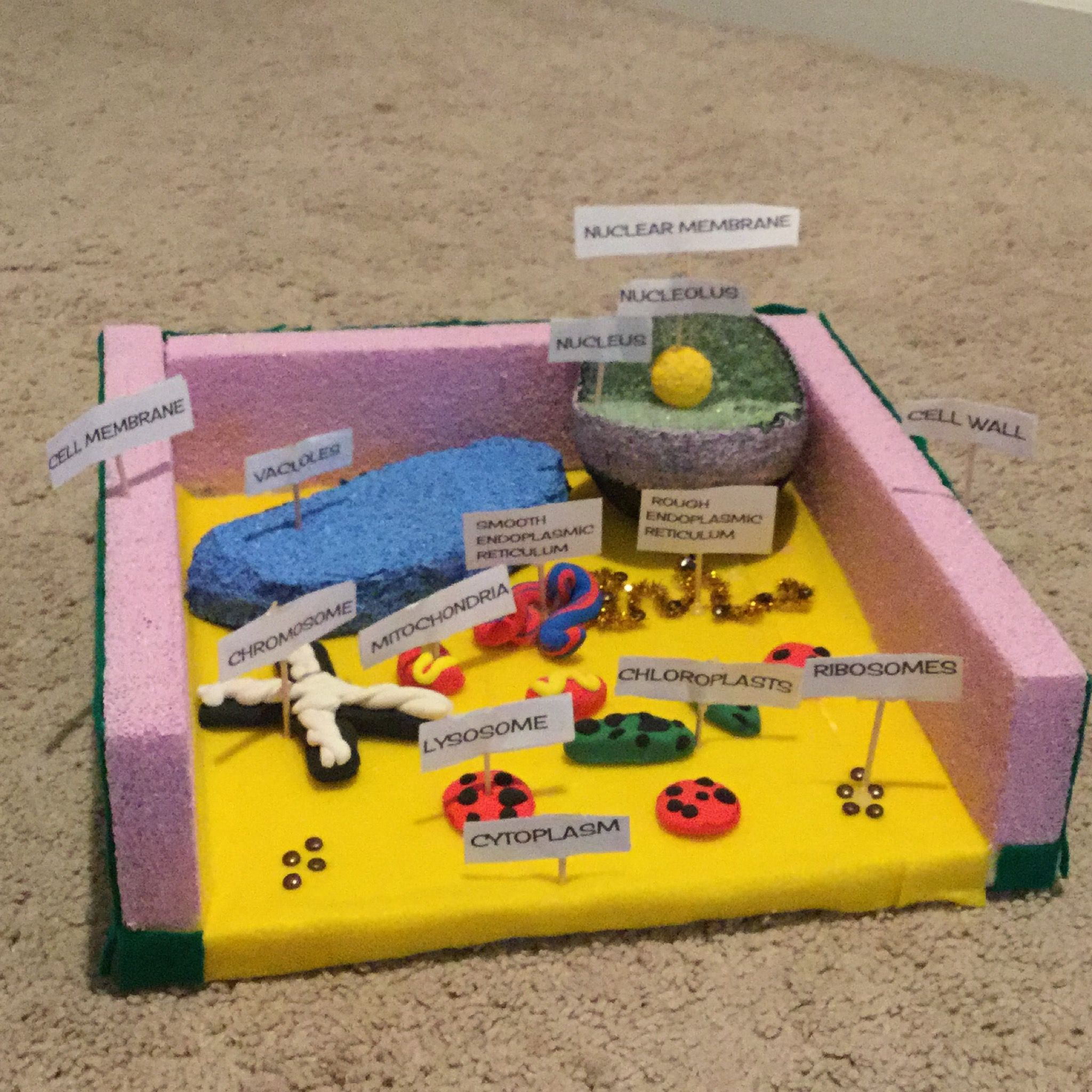 Easy Plant Cell Model Diagram Drawing Simple Cells Basic Project 3d