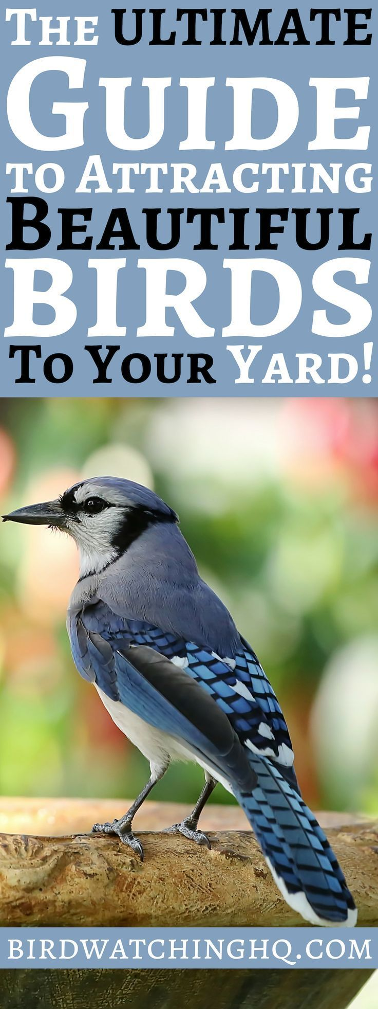 Attract birds with these simple strategies 2020 how to
