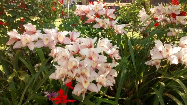Orchids from granny