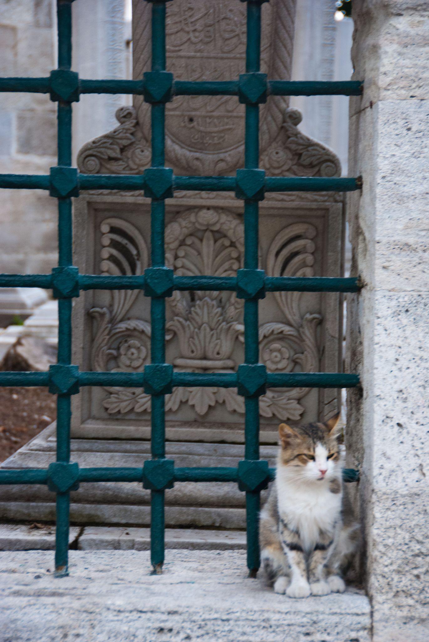 https://flic.kr/p/de8HKs | Ístanbul | Süleymaniye Mosque - Cat at the cemetery