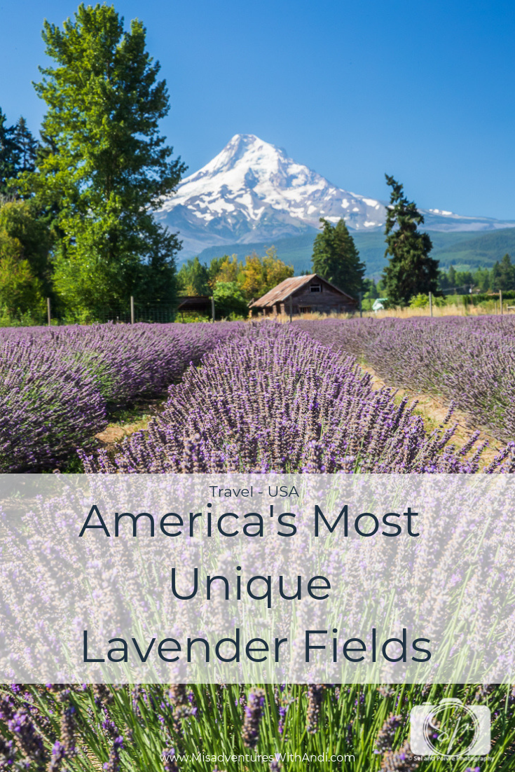 5 Unique Lavender Fields And Lavender Farms In The Usa Travel