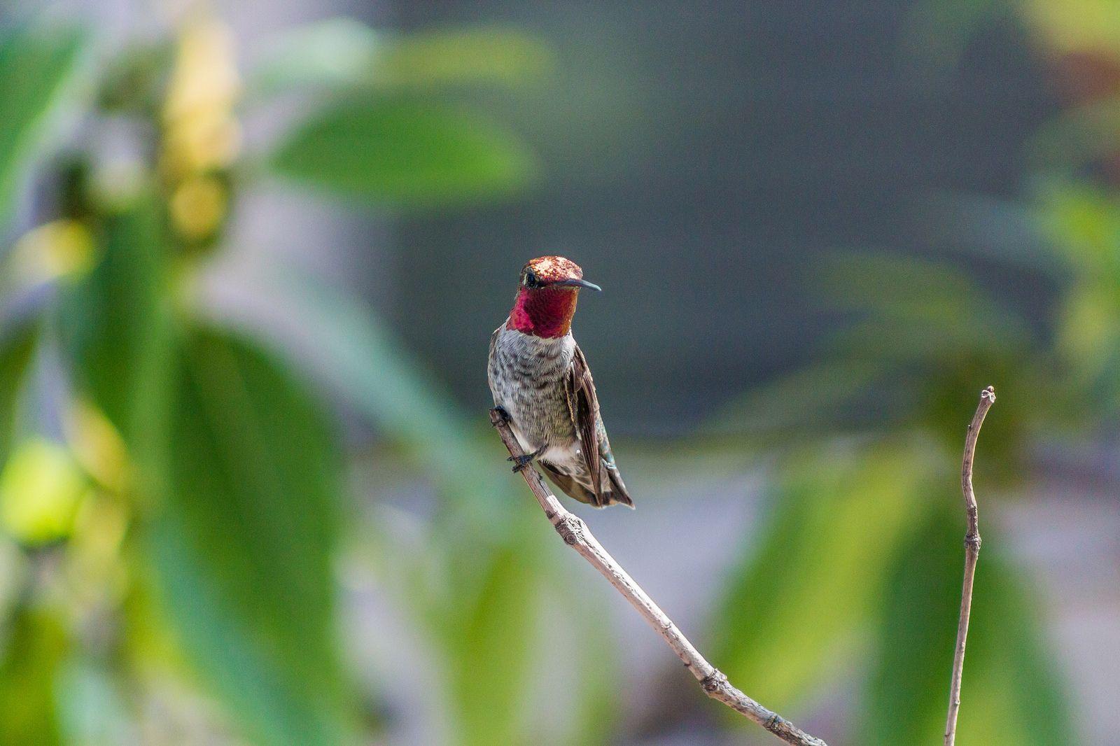 벌새 - 유용원의 군사세계