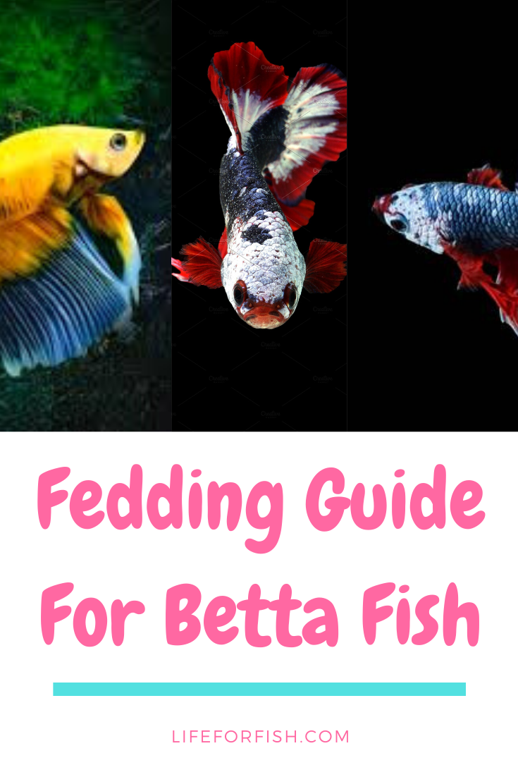 Betta Food What Does Betta Fish Eat Feeding Guide In 2020 Betta Fish Betta Food Koi Fish Food