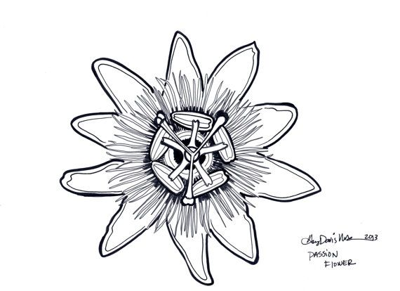 Passion Flower Drawing Google Search Passion Flower Passion Fruit Flower Original Ink Drawing
