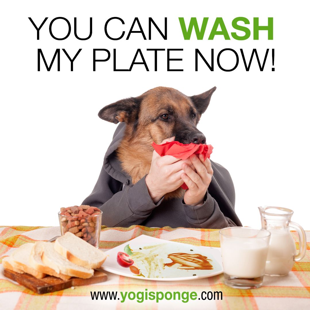 Wash His Dish With His Own Personal Sponge Yogi Sponge Pets