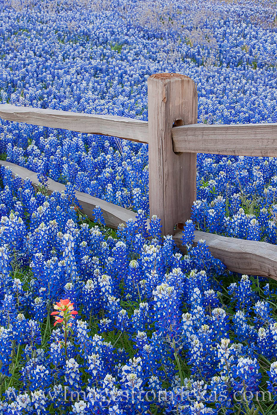 high resolution texas wallpaper Google Search Fence