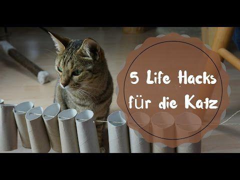 Fummelbrett Fur Katzen Katzenspielzeug Selber Bauen