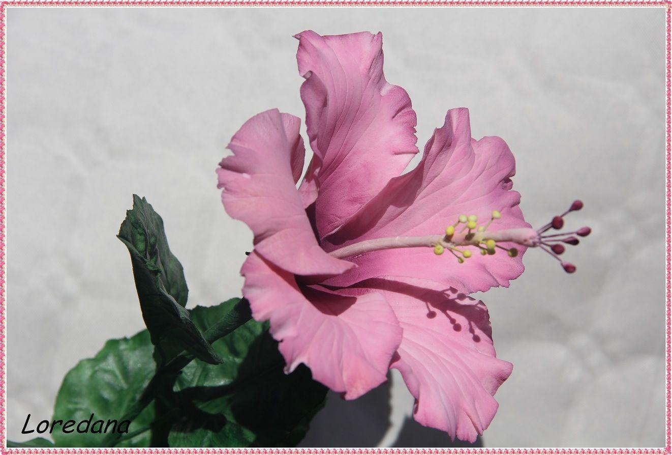 Hibiscus in gum paste by loredana atzei postupy pinterest gum hibiscus in gum paste by loredana atzei izmirmasajfo