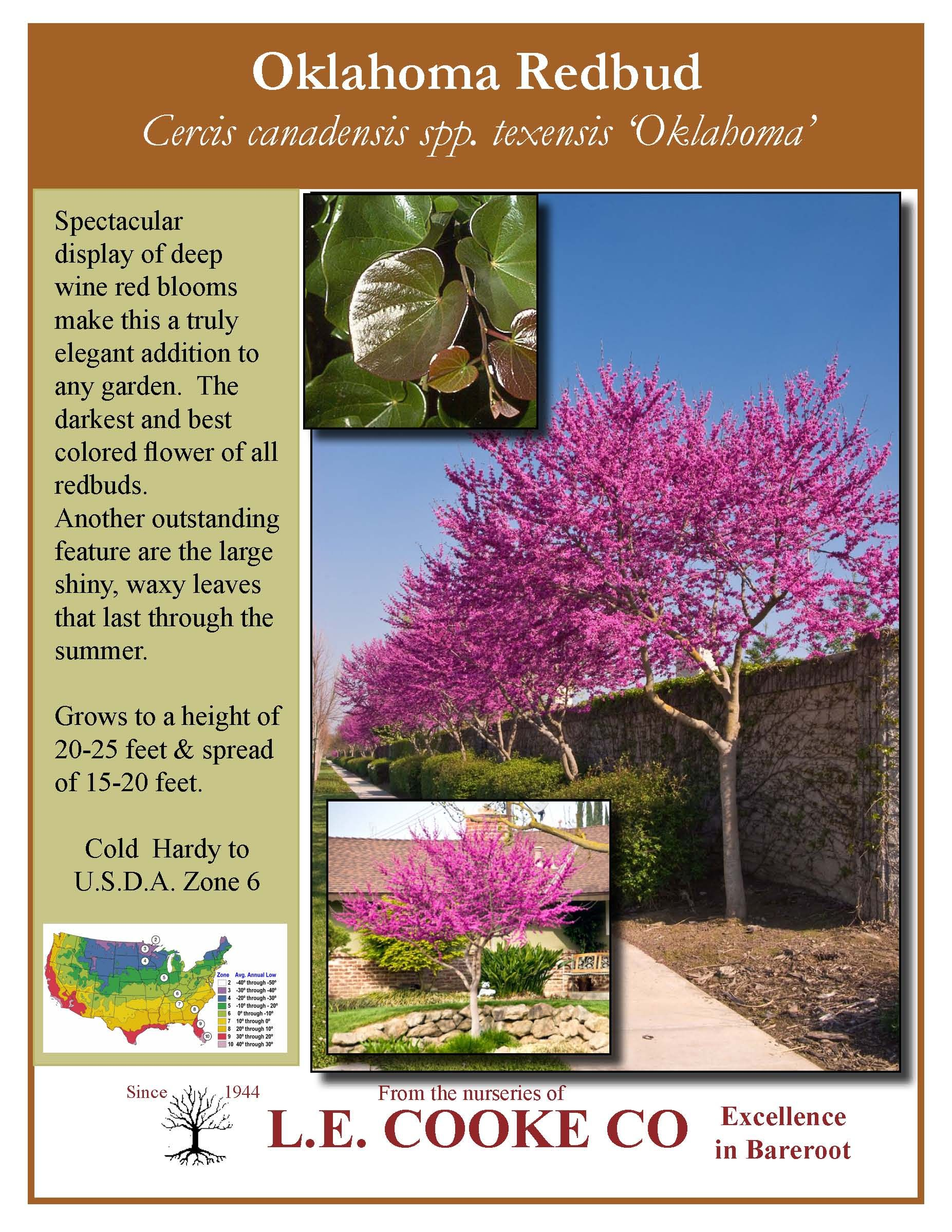 actually for the front yard always wanted a redbud oklahoma u0027s