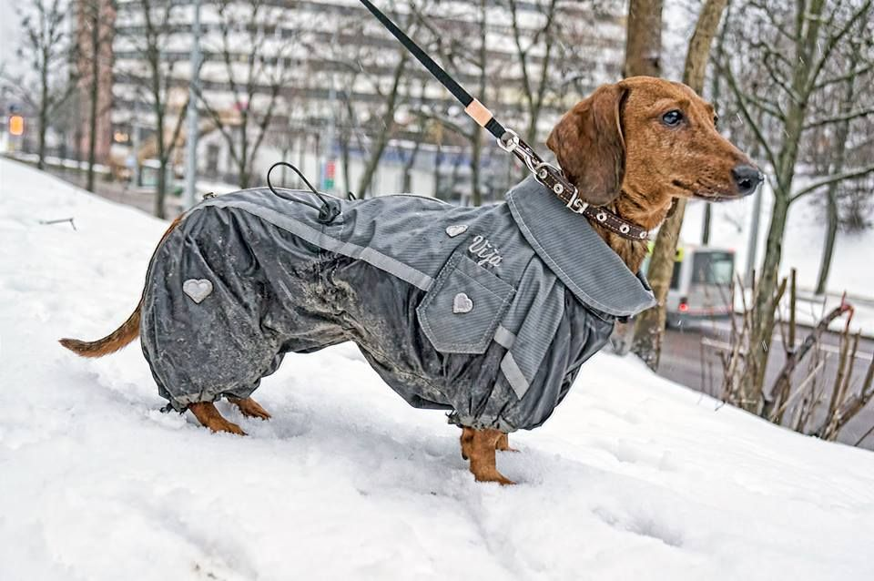 Awesome Custom Made Dachshund Snowsuit Warm Winter Overall