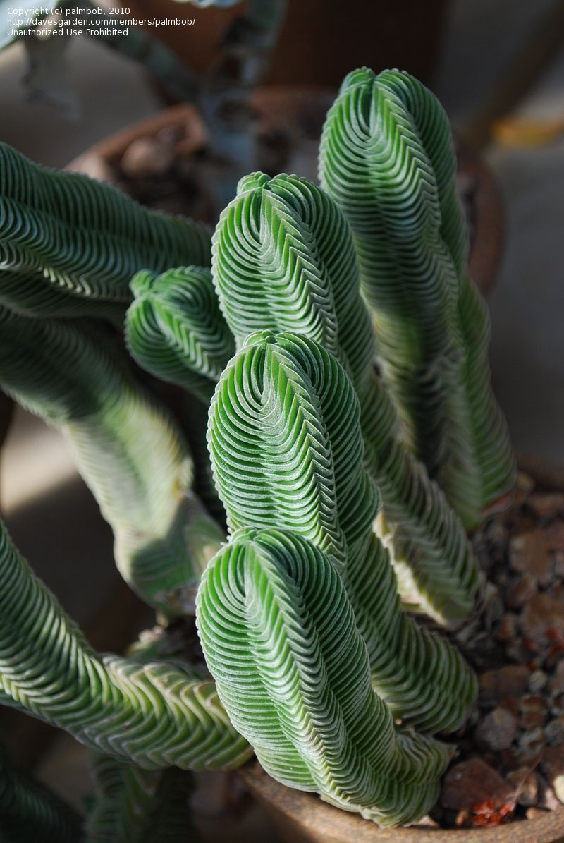 Planting Succulent Seeds How To Grow