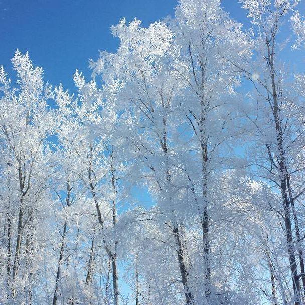 #frostymorning #frost #bluesky #bccanada #sopretty #canadiangirl #myparadise #naturelover #lovenature #visitburnslake #scenery #whitetrees #wintersbeauty #cold #winter #winterwonderland #beautifulbc #explorebc #bccanada #britishcolumbia #beautiful #canada