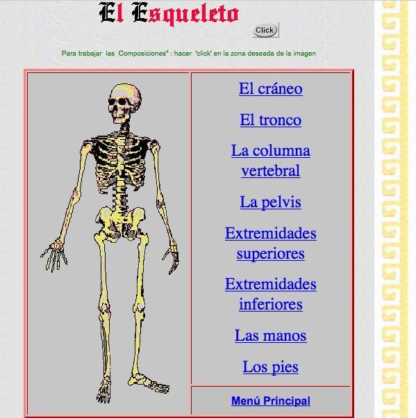 Unidad con recorrido por el esqueleto humano   Ciencias biológicas