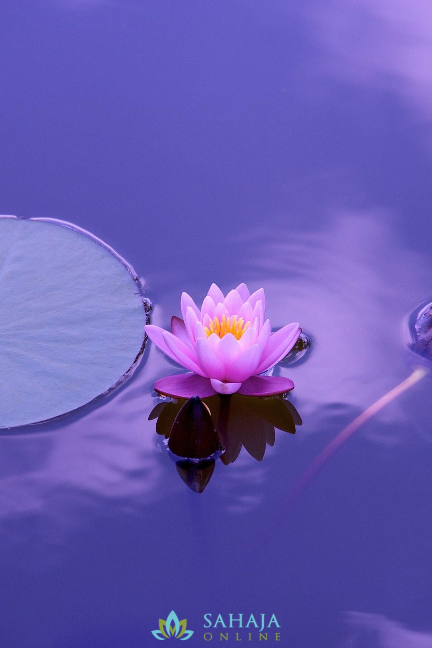 Online Meditation Courses Nature Iphone Wallpaper Lotus