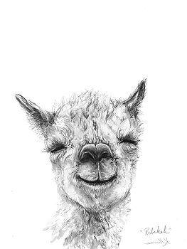 K Llamas Rebekah With Images Llama Drawing Animal Canvas