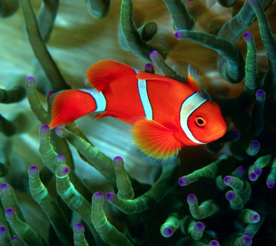 Fish Wallpapers For Desktop 1920×1200 Images Of Fish Wallpapers (45 ...