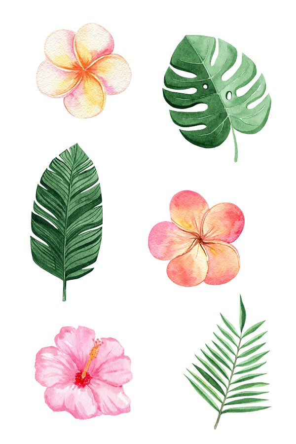 Pin On Jungle Beauty