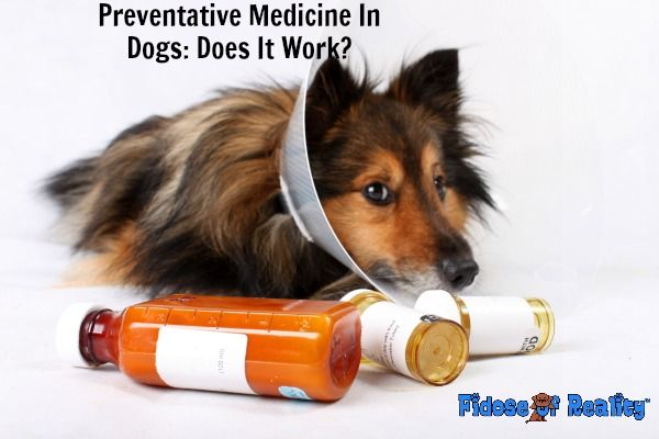 Preventative Medicine In Dogs Does It Work Dog Health
