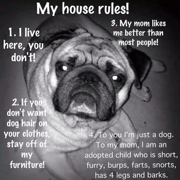 My Pugs House Rules Dogs Pug Quotes
