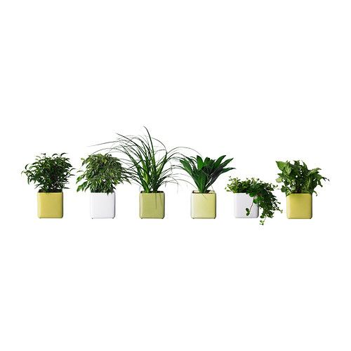 stollig potted plant with pot assorted new flat potted plants ikea plants und ikea. Black Bedroom Furniture Sets. Home Design Ideas