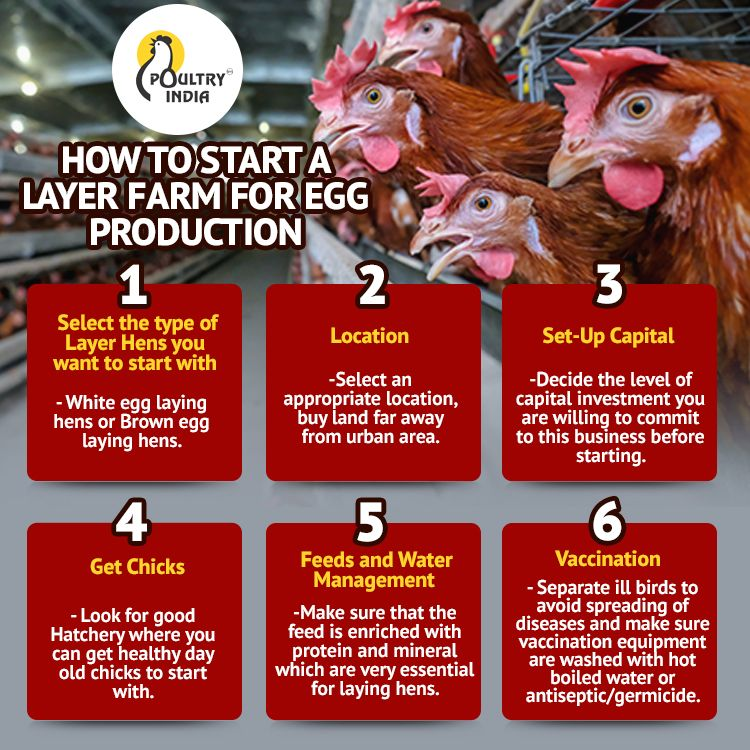 Trying to start a Layer farm for Egg Production? . .