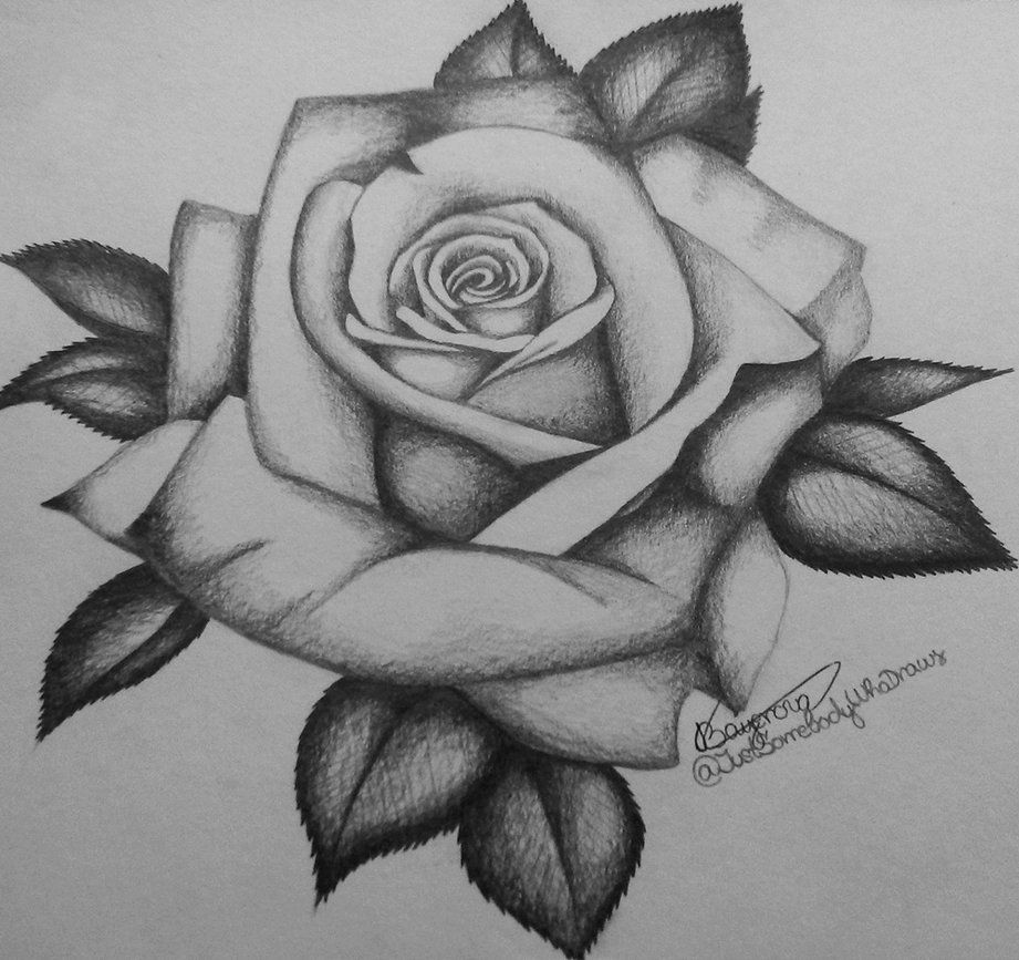 Rose By Justsomebodywhodraws Rose Flower Tattoos Roses Drawing Rose Outline Tattoo