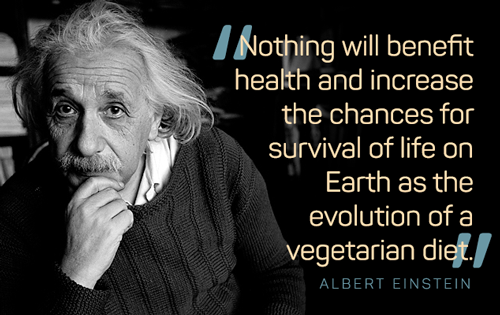 Albert Einstein Vegetarian Quote He Knew S3 Albert Einstein