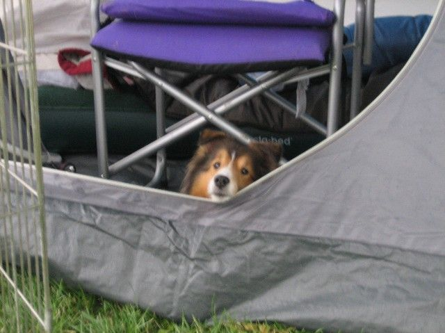 I want Shadow to come camping with us!