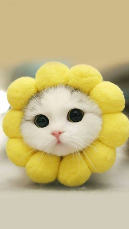 This cute cat with flower head on
