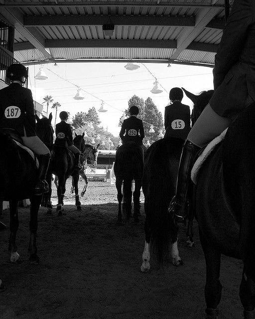 photo by sada crawford #horses #horse shows #competition