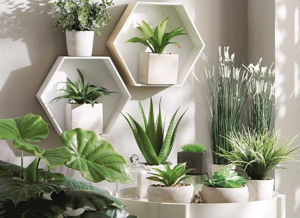 Kwiaty doniczkowe można ustawić również na półkach ściennych | Plants,  Houseplants, Flowers