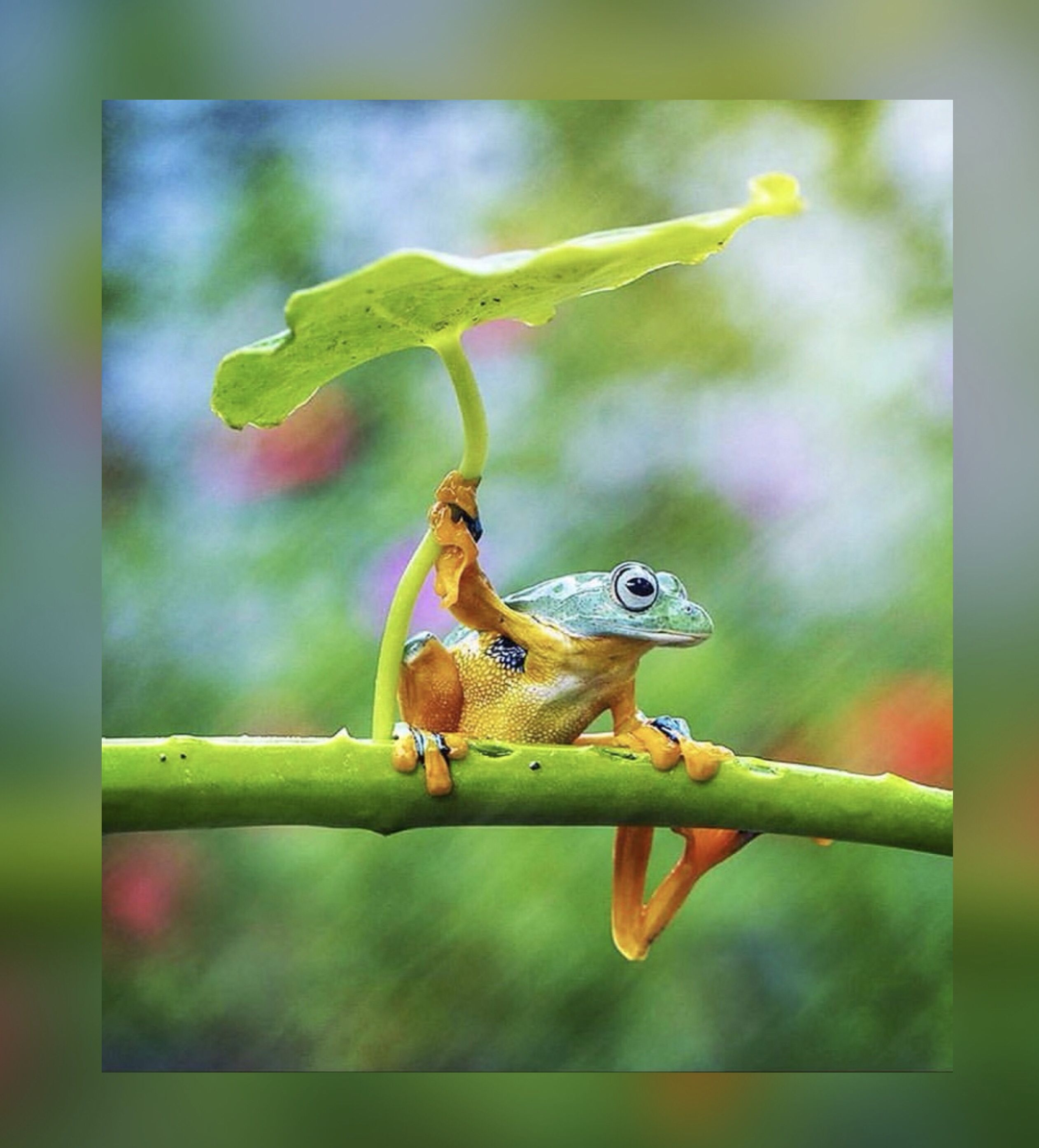 Pin by Kar3n.59 on Jehovah's Awesome Creation Cute frogs
