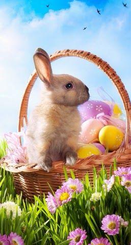 Iphone Wallpaper Easter Tjn Easter Wallpaper Easter Bunny History Bunny Wallpaper