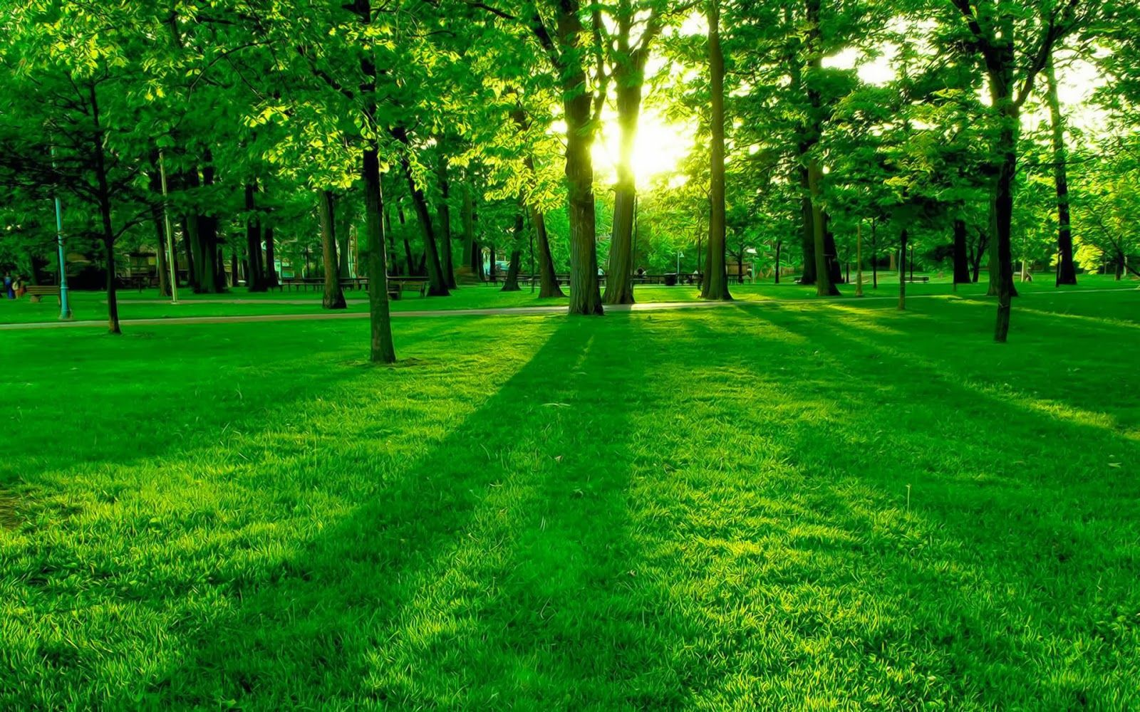 Most Beautiful Green Nature Google Search Green Nature Wallpaper Hd Nature Wallpapers Beautiful Nature Wallpaper