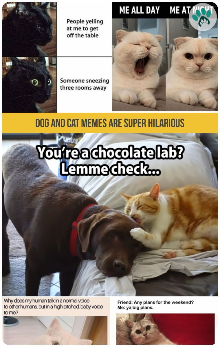 Dog And Cat Memes Are Super Hilarious Dog Cat Adorable Cute Animals Cat Memes